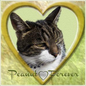 Peanut, Forever